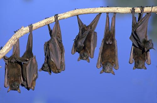 morcegos bats